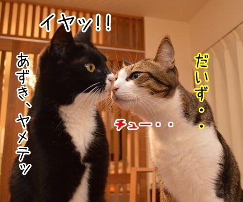 アタチ、じつは… 猫の写真で4コマ漫画 1コマ目ッ