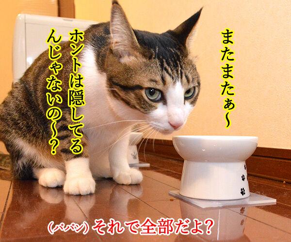 あずきさん ごはんだよぉー 猫の写真で4コマ漫画 3コマ目ッ