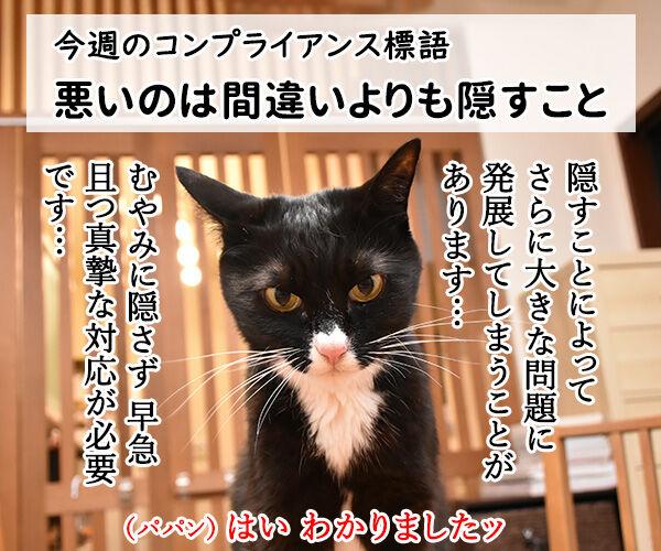 今週のコンプライアンス標語はこれなのよッ 猫の写真で4コマ漫画 1コマ目ッ