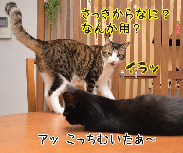 ねぇねぇ~ ねぇってばぁ~ 猫の写真で4コマ漫画 3コマ目ッ