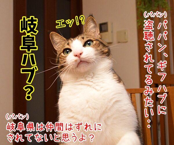 パパン、ギフハブに…… 猫の写真で4コマ漫画 1コマ目ッ