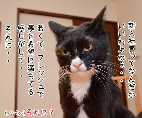 新入社員っていいよね 猫の写真で4コマ漫画 3コマ目ッ
