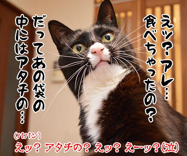 パパンのこっそりオヤツ 猫の写真で4コマ漫画 4コマ目ッ