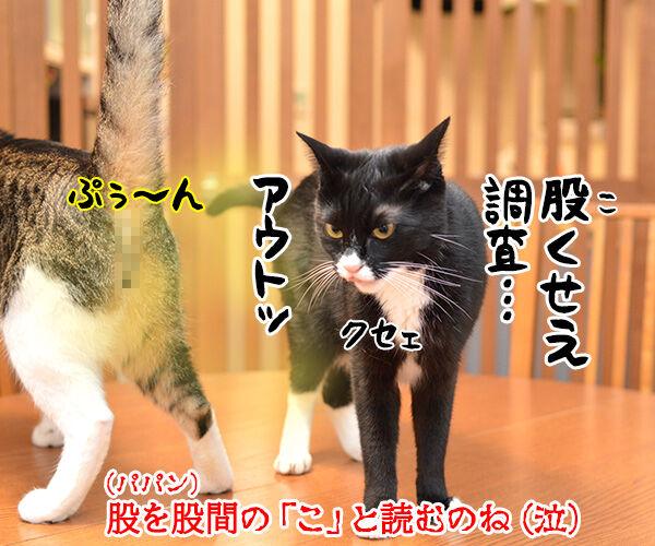 国勢調査は10月7日までなのよッ 猫の写真で4コマ漫画 4コマ目ッ