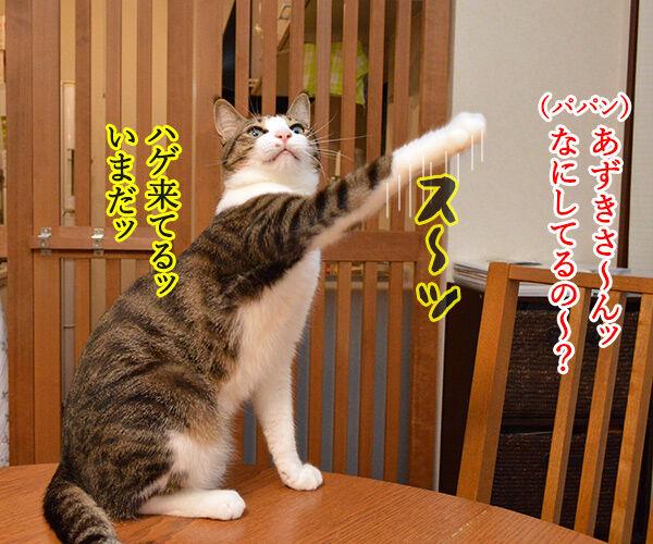 とりあえず 猫の写真で4コマ漫画 3コマ目ッ