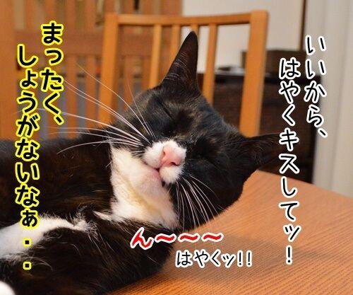 今すぐKiss me 猫の写真で4コマ漫画 3コマ目ッ