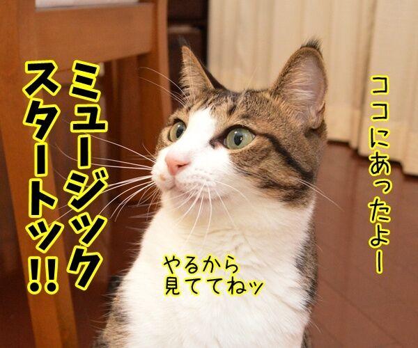 ペンパイナッポーアッポーペン(PPAP)って知ってる? 猫の写真で4コマ漫画 3コマ目ッ