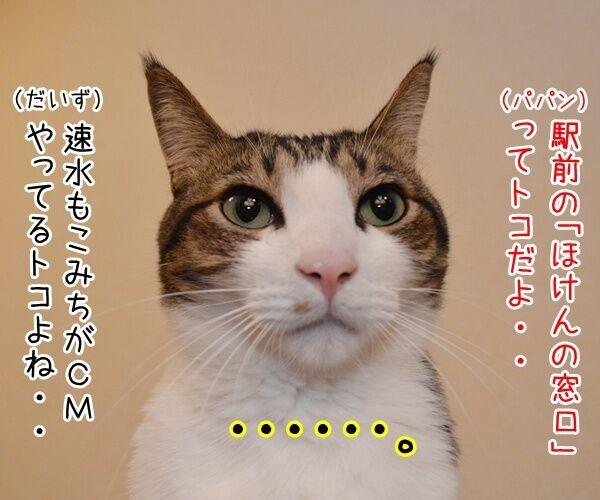 保険に入ろうと思って…… 猫の写真で4コマ漫画 2コマ目ッ