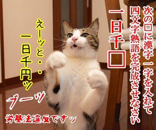 クイズ 四文字熟語ッ!! 猫の写真で4コマ漫画 1コマ目ッ