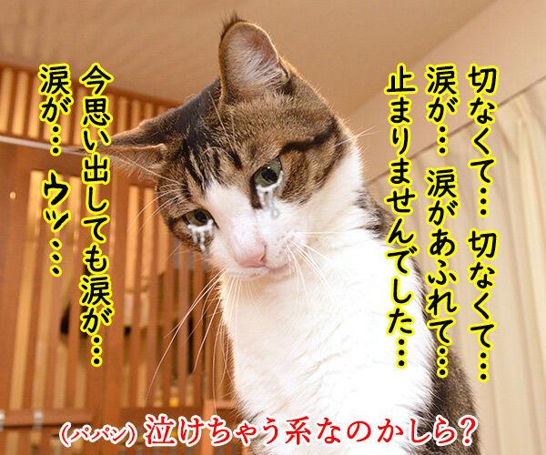 猫好きが泣いて喜ぶ写真集をご紹介ッ 猫の写真で4コマ漫画 3コマ目ッ
