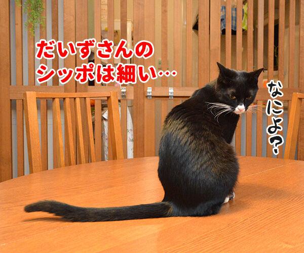 だいずさんは○○ 猫の写真で4コマ漫画 1コマ目ッ