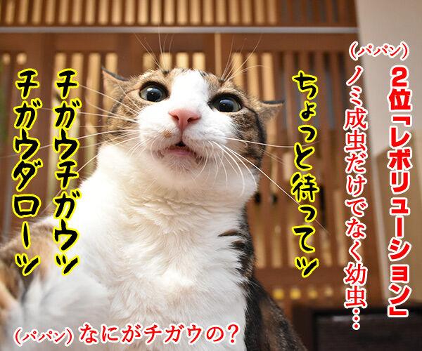 使っている寄生虫駆除剤ランキング 猫の写真で4コマ漫画 3コマ目ッ