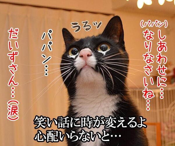 秋桜(コスモス) 猫の写真で4コマ漫画 3コマ目ッ