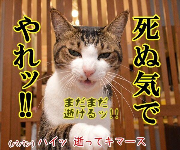 パパン、〇〇気でやりますッ 猫の写真で4コマ漫画 2コマ目ッ