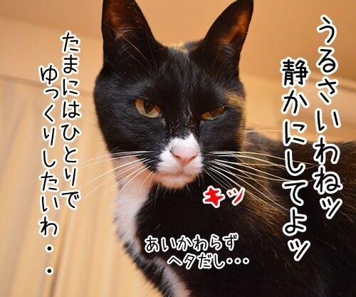 ひとりっこ 猫の写真で4コマ漫画 2コマ目ッ