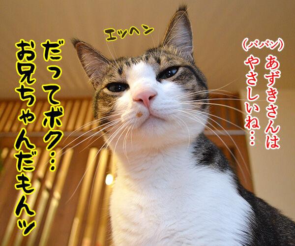 だってボク 猫の写真で4コマ漫画 4コマ目ッ
