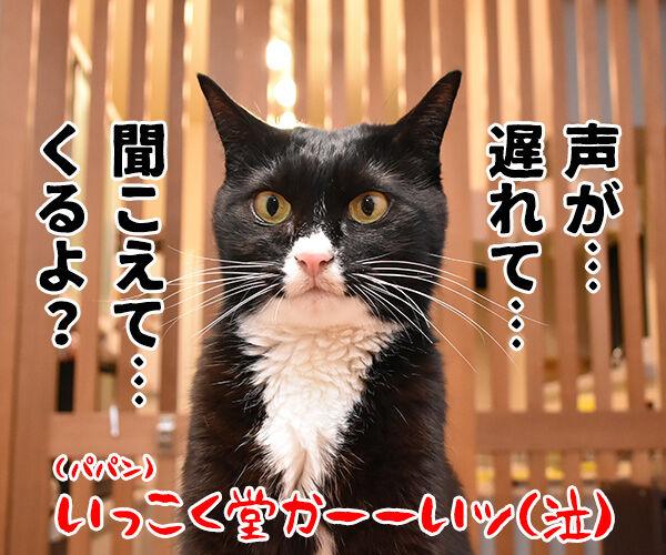 それはもしかしてサイレントニャー? 猫の写真で4コマ漫画 4コマ目ッ