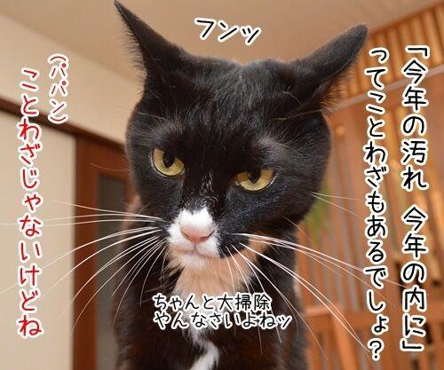 今年の汚れ、今年のうちに 猫の写真で4コマ漫画 2コマ目ッ