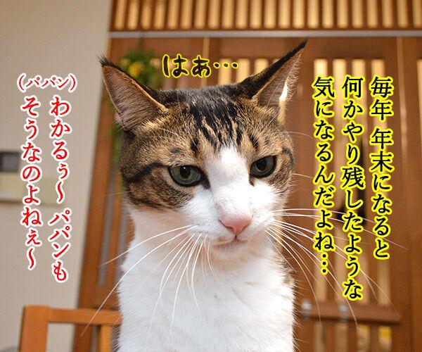 今年やり残したコト 猫の写真で4コマ漫画 2コマ目ッ