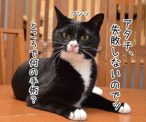 ドクターX 其の一 猫の写真で4コマ漫画 3コマ目ッ