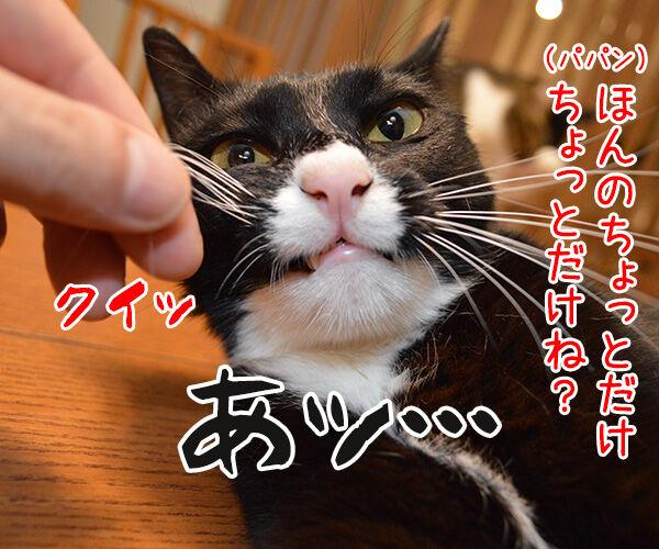 だいずの秘密 猫の写真で4コマ漫画 2コマ目ッ