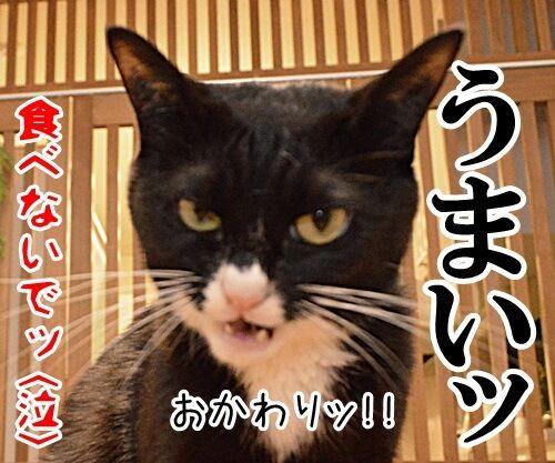 鼻くちょついてるッ 猫の写真で4コマ漫画 4コマ目ッ