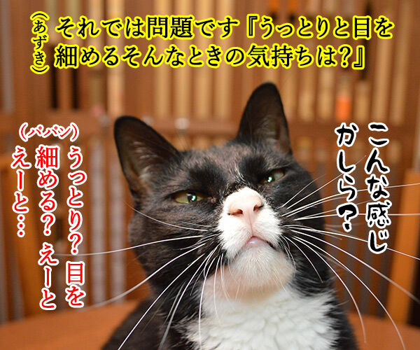 教えてッ あずき先生ッ 猫の写真で4コマ漫画 2コマ目ッ