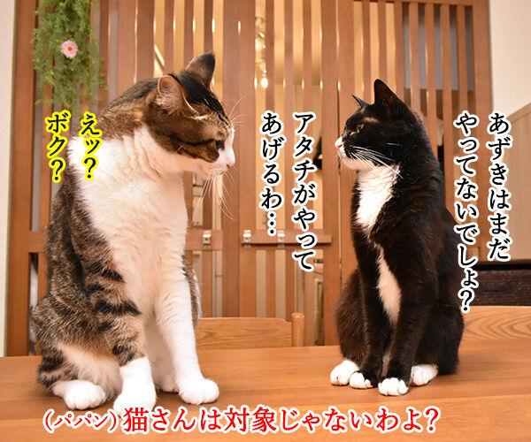 国勢調査は10月7日までなのよッ 猫の写真で4コマ漫画 3コマ目ッ