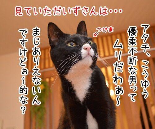 こっちにおいで 猫の写真で4コマ漫画 4コマ目ッ