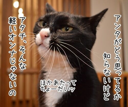 告白されたけど 猫の写真で4コマ漫画 3コマ目ッ