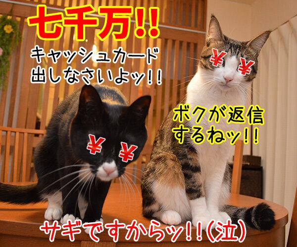 迷惑メール 猫の写真で4コマ漫画 4コマ目ッ