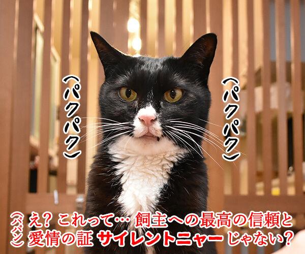 それはもしかしてサイレントニャー? 猫の写真で4コマ漫画 2コマ目ッ