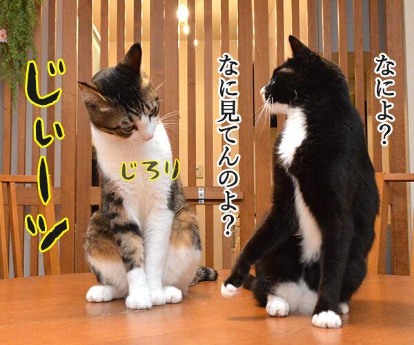 就職活動に必要なもの 猫の写真で4コマ漫画 2コマ目ッ