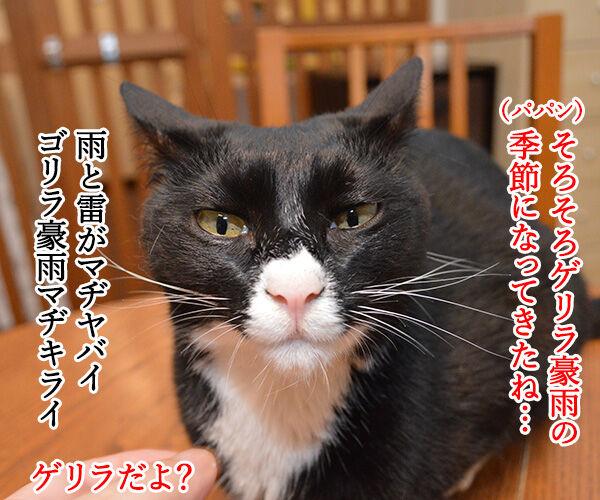 ゲリラ豪雨がやんだら? 猫の写真で4コマ漫画 1コマ目ッ