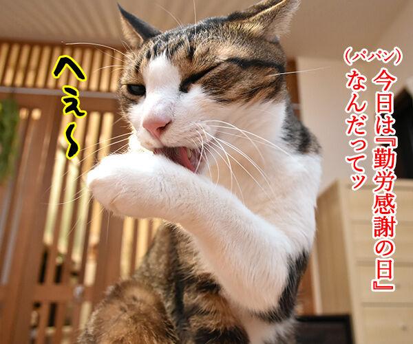 『勤労感謝の日』だから感謝してほしいのッ 猫の写真で4コマ漫画 2コマ目ッ