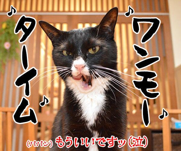 猫さんのシックスセンス 猫の写真で4コマ漫画 4コマ目ッ