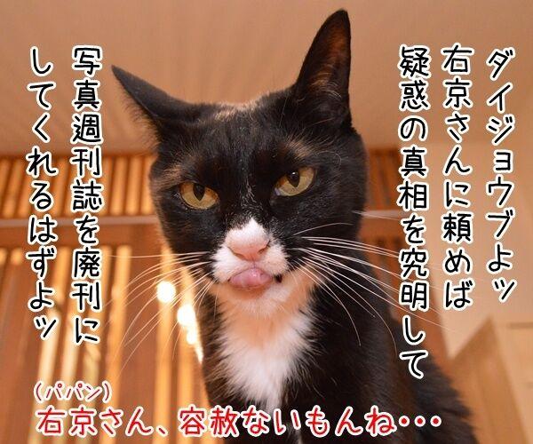 成宮くんが芸能界引退するんですってッ 猫の写真で4コマ漫画 3コマ目ッ