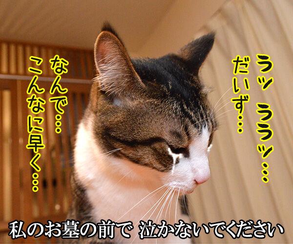 千の風になって 猫の写真で4コマ漫画 1コマ目ッ