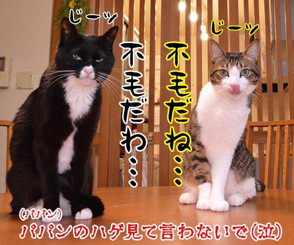 きのこの山 vs たけのこの里 猫の写真で4コマ漫画 4コマ目ッ