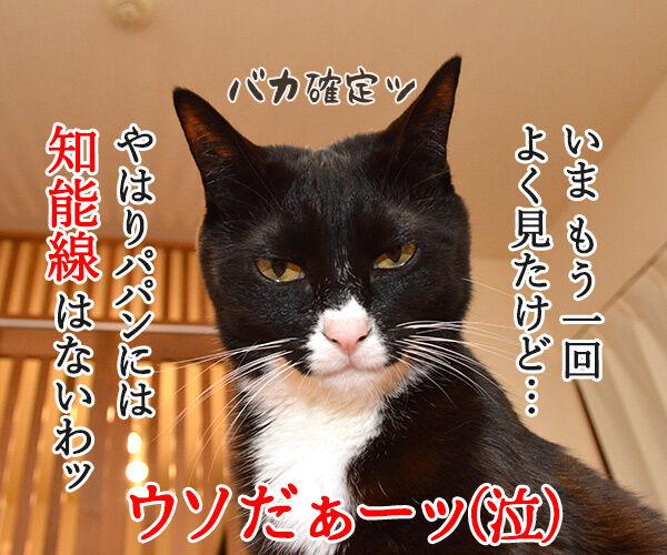 ウソだッ!!ウソだぁッ!! 猫の写真で4コマ漫画 4コマ目ッ