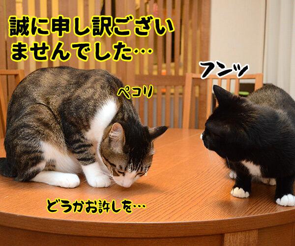 疑惑 其の三 猫の写真で4コマ漫画 4コマ目ッ