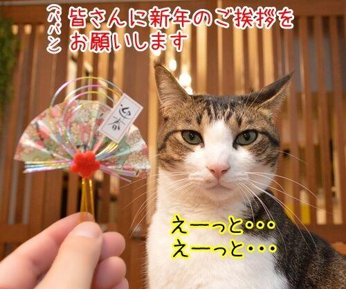 元旦だから新年のご挨拶 猫の写真で4コマ漫画 1コマ目ッ