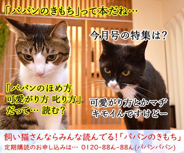 きもちがわかるやつ 猫の写真で4コマ漫画 4コマ目ッ