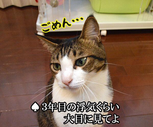 3年目の浮気 猫の写真で4コマ漫画 3コマ目ッ
