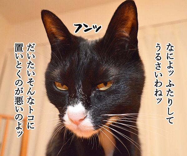 変身 猫の写真で4コマ漫画 2コマ目ッ