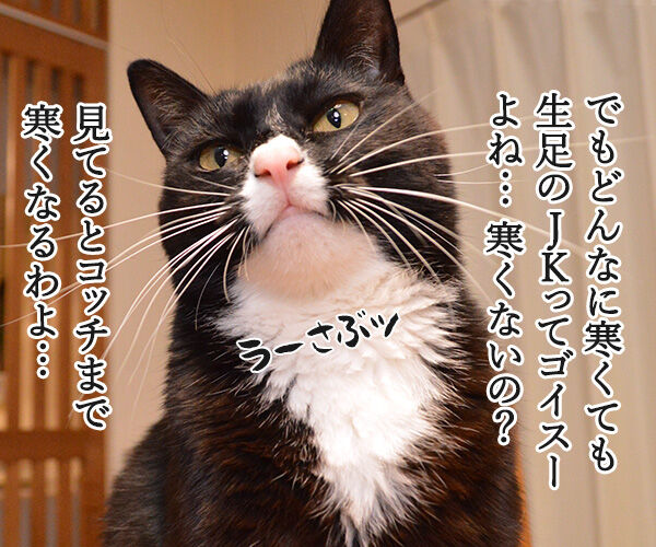 保険に入ろうと思って… 猫の写真で4コマ漫画 3コマ目ッ