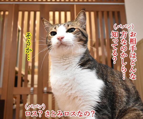 石原さとみさん ご結婚オメデトゴザマース♥ 猫の写真で4コマ漫画 3コマ目ッ