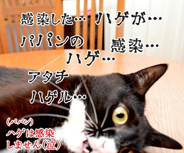 ちょっと待ってッ!! 猫の写真で4コマ漫画 4コマ目ッ