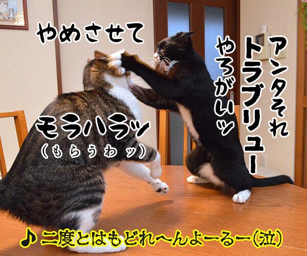 夫婦漫才 ミカとジョージ 猫の写真で4コマ漫画 4コマ目ッ