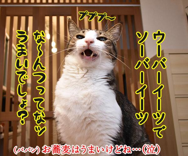 ウーバーイーツでうまいでしょ? 猫の写真で4コマ漫画 2コマ目ッ